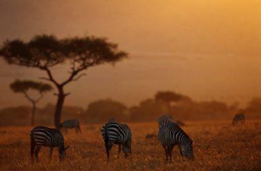 África e Drones como o futuro da produção de alimentos