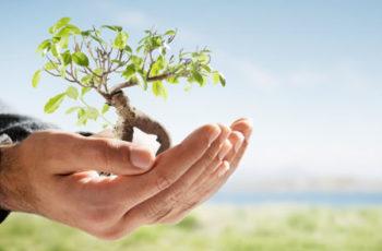 Drone e Meio Ambiente: Inovação e Sustentabilidade a favor da Cana-de-açúcar