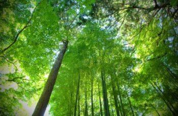 Drone irá plantar um bilhão de árvores em um ano
