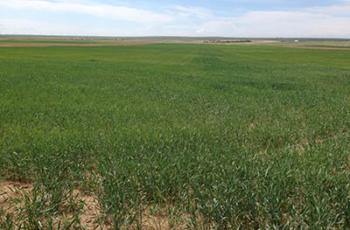 Imagens NDVI para agricultura