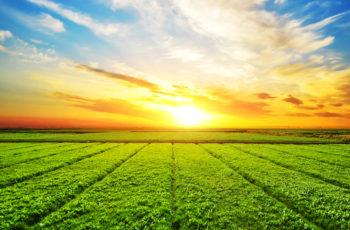 Agricultura de Precisão com Drones