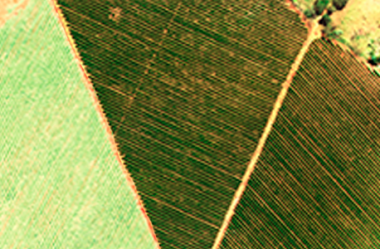 Qual é a influência do Índice de Área Foliar nos Índices de Vegetação?