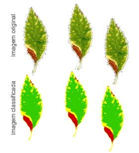 Índice de Área Foliar